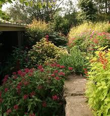 26 best texas butterfly u0026 hummingbird gardening images on