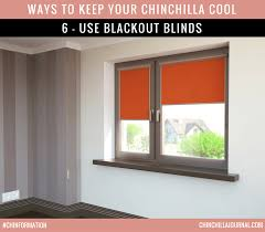 How To Blackout Windows by 10 Ways To Keep Your Chinchilla Cool In Weather Chinchilla