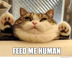 Feed Me Meme - feed me human meme boomsbeat
