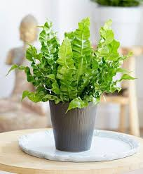 plants for office desk 5 office plants that won t die on you good reads life inspired