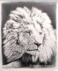 new lion pencil drawing finished remrov u0027s artwork