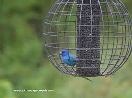 best feeders for backyard birdwatching review of tube feeders