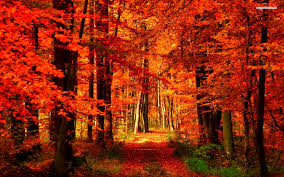 Autumn Colors The Meaning And Symbolism Of The Word Autumn