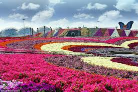 Largest Flower In The World World S Largest Flower Garden With 45 Million Flowers In The