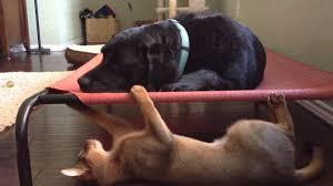 Replacement Hammock Bed Furniture Coolaroo Dog Bed Coolaroo Dog Bed Walmart Kundra