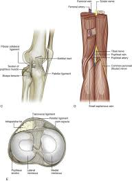 Lateral Patellar Ligament Knee Ultrasound Clinical Gate