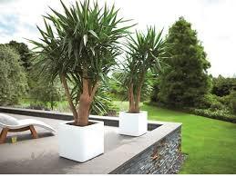 Square Planter Pots by 14 Best Pure Plant Pots Images On Pinterest Planters Flower