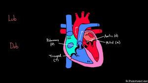 flow heart video khan academy