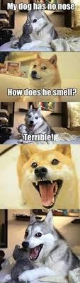 Pun Husky Meme - pun dog image gallery know your meme