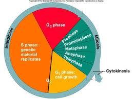 citrus college chapter 8 the cell cycle