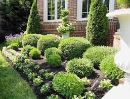 fanciful landscaping shrubs pictures of for design and bushes trees