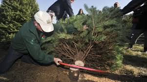 Cutting Christmas Tree - njda to hold christmas tree cutting ceremony morning ag clips