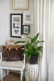 Plants That Don T Need Light Outdoor Plants That Dont Need Sunlight Bedroom Oxygen At Night