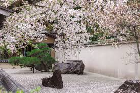 Japanese Style Garden by Zen Garden Japanese Style Decorates By Pink Cherry Blossom In