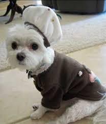 Small Puppy Halloween Costumes Designer Handmade Brown Pup Cake Halloween Costumes Small