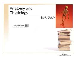 Study Guide Anatomy And Physiology 1 Chapter 1 Anatomy U0026 Physiology 1 Ppt Download