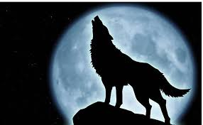 wolf howling by jadewilliamssmith on deviantart
