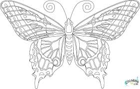 detailed butterfly coloring pages for adults detailed butterfly coloring pages coloring pages butterfly also 7