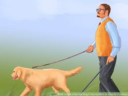 How Does A Guide Dog Help A Blind Person 3 Ways To Get A Service Dog If You U0027re Blind Or Visually Impaired