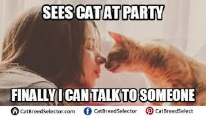 Cat Lady Meme - cat memes cat breed selector