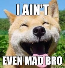 Happy Dog Meme - i ain t even mad bro happy dog quickmeme