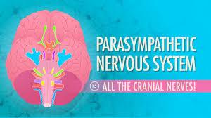 Unit Secretary Course Parasympathetic Nervous System Crash Course A U0026p 15 Youtube