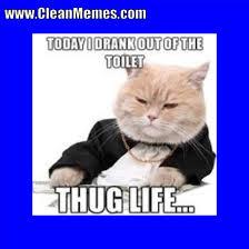 Grumpy Cat Meme Clean - cat memes clean memes the best the most online