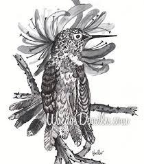 hummingbird sketch 2 waldo u0027s doodles