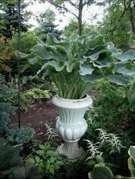 grow a lush shade garden with hostas lush gardens and gravel path