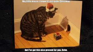 Christmas Cat Memes - funny christmas cat memes funny cat pictures