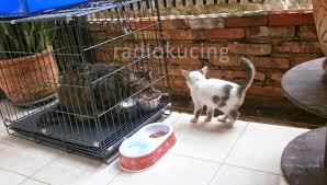 Sho Kucing Anti Jamur pertanyaan pertanyaan seputar memandikan kucing di rumah