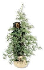 ditz designs tahoe tree bear available at binns of williamsburg