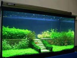 Fish Tank Idea – senalka