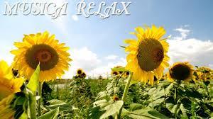 imagenes flores relajantes musica flores y relax 5 sd musica relajante relax music