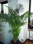 ตลาดร่ำรวย™] ต้นไม้ให้เช่า เช่าต้นไม้ ต้นไม้สำนักงาน ต้นไม้ในร่ม ...