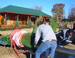 reasonable prices for fresh christmas trees at motley u0027s christmas