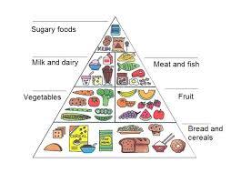 the failure of the food pyramid derek christensenderek christensen