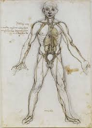 Pictures Of Anatomy Of The Human Body Outline Of Human Anatomy Wikipedia