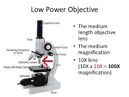 what is a light microscope used for what is the use of low power objective in microscope