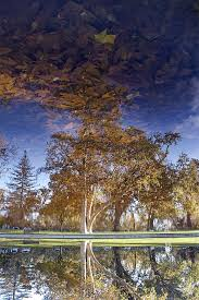 39 Best Chico My Hometown Images On Pinterest Chico California