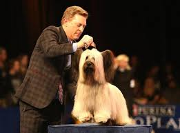 the 25 best national show ideas on akc shows