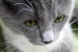 pets on prozac the dark side of animal emotions new york post