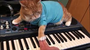 Keyboard Cat Meme - keyboard cat teaches keyboard youtube