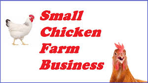 small chicken how to start a small chicken farm business 13 steps youtube