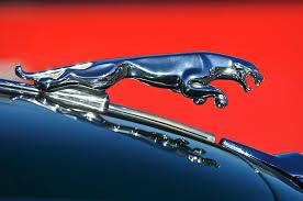 jaguar ornament photograph by reger