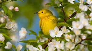 Flower And Bird - bird and flower wallpaper hd