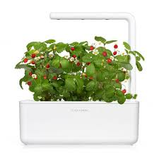wild strawberry grow fresh food at home click u0026 grow