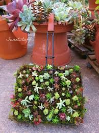 Hanging Succulent Planter by 12 Best Succulent Garden Ideas Images On Pinterest Succulents