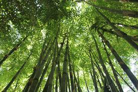 bamboo the abcs of green building materials green building
