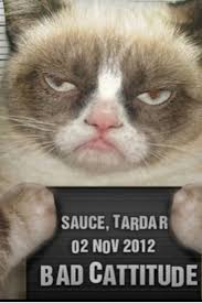 Awesome Quotes About Cats Being - 37 best grumpy cat 3 images on pinterest cute kittens cat stuff